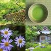 京都のお茶会